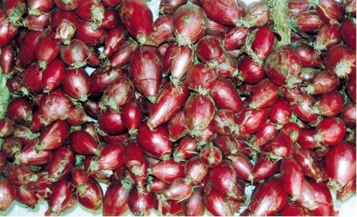 composta di cipolle rosse di tropea, piccante e in agrodolce